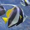 Sharjah Aquarium : There's more to Sharjah than traffic.