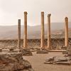 Iran 1: Shiraz : Pasargadae, Persepolis 25-28 November 2009